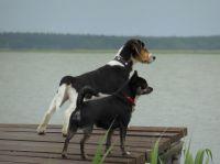 Hier müssen Hunde mit ! - Bild 2: Darssurlaub - Wassergrundstück mit Hund - eingezäunter Terrasse, Angeln
